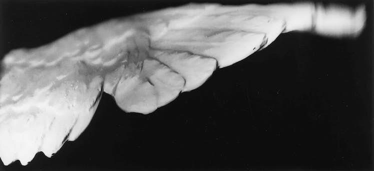 Michel COUTURIER Grande aile noire