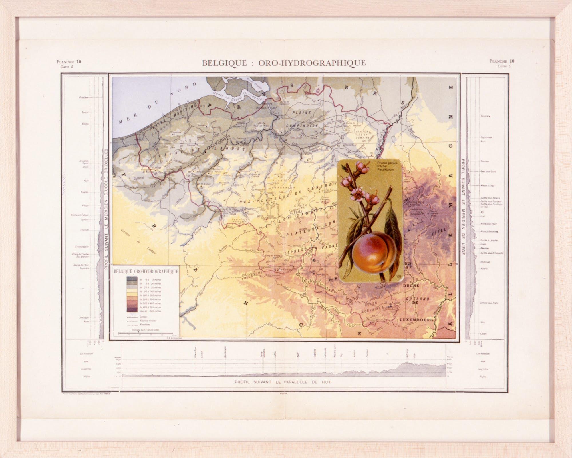 Thierry TILLIER Atlas Botanica 2