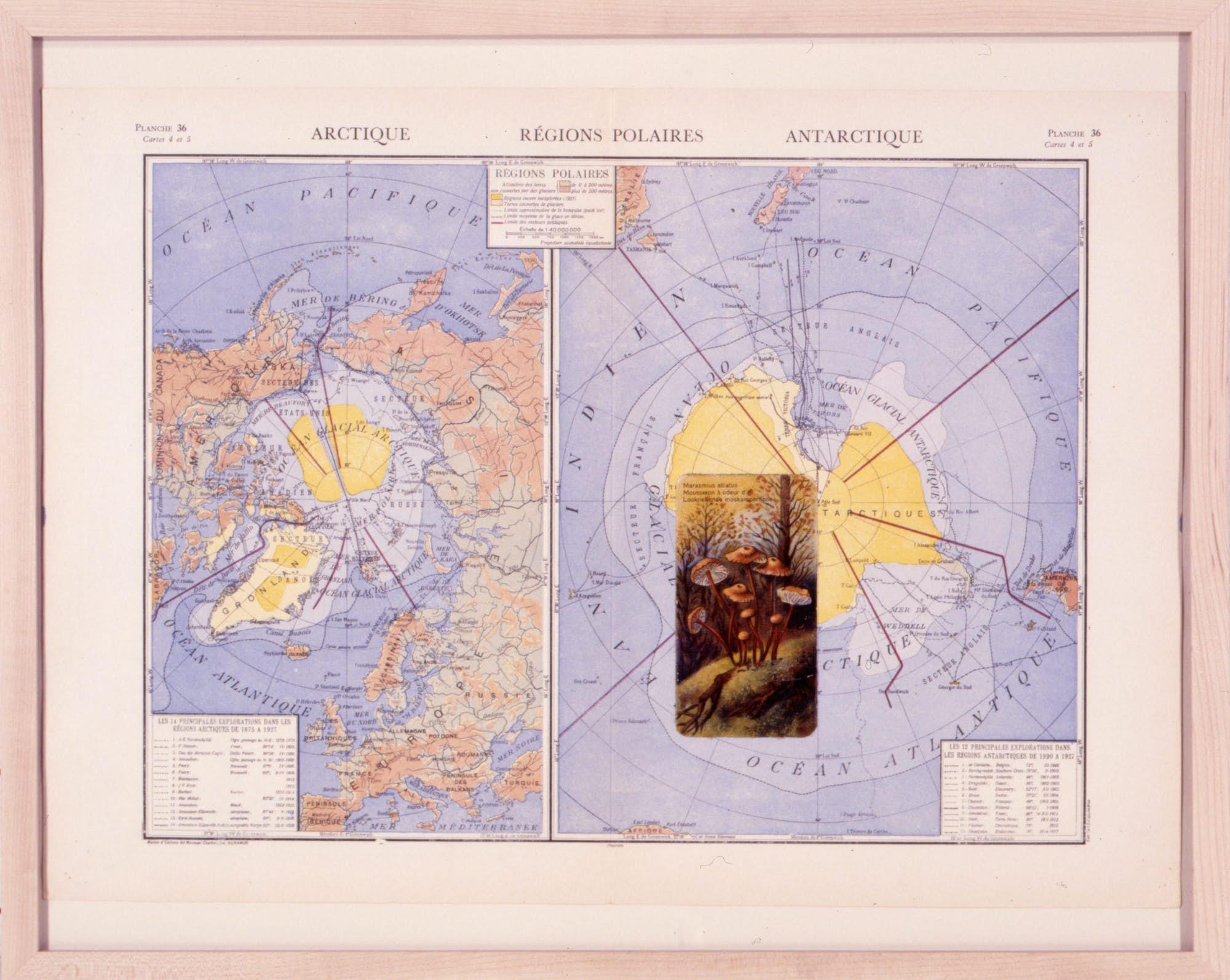 Thierry Tillier Atlas Botanica 3